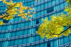 Tree shade and building in business zone Royalty Free Stock Image