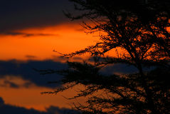 Tree shade and dramatic sunset Stock Photos