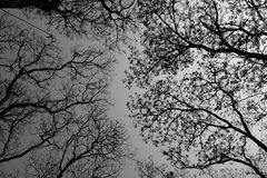 Tree shade. Image of black and white tree shade Royalty Free Stock Photo