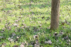 Tree shade and lawn Stock Image