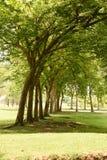 Tree shade Royalty Free Stock Photo