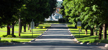 Street trees. Shaded tree-lined street in a small town Stock Image