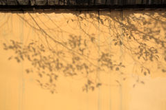 Tree shade on the wall Stock Photos