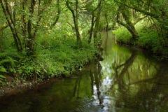 Tree shaded brook Stock Photography