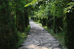 Tree-shaded path Stock Photo