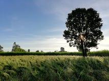 Tree shading on grass field stock photography
