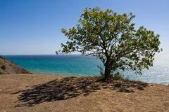 Tree and shadow Royalty Free Stock Photo