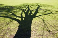 Tree shadow Royalty Free Stock Images