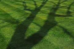 Tree Shadow on Green Lawn Stock Photos