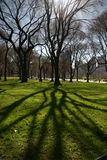 Tree with Shadow. Wide angle shot of backlit tree with defined shadow.  Taken in Central Park, NYC Royalty Free Stock Photo