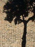 Tree Shadow. A shadlow of a tree onto a brick wall stock photos