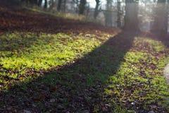 Tree shadow in autumn Royalty Free Stock Photos
