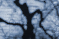 Tree shadow on blue brick wall. Stock Images