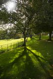The meadow tree. Tree with shadow of branches backlit by sun Royalty Free Stock Photography