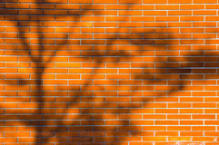 Tree shadow on the brick wall Royalty Free Stock Image