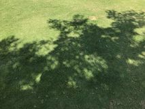 Tree shadow on grass field Stock Photos
