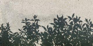 Tree shadow on gravel texture Stock Photos
