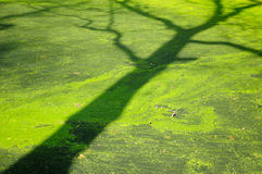 Tree Shadow Stock Image