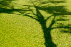 Tree shadow on green grass Stock Images