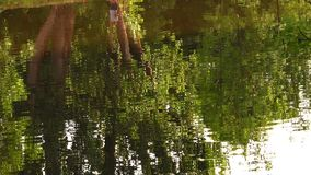 Tree Shadow on Green Lake. Video stock footage