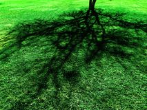 Tree Shadow on Green Lush Grass Stock Photos