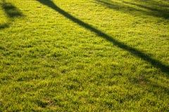 Tree shadow Stock Image