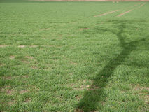 Tree shadow on lawn. Tall tree shadow on green lawn on sunny day. Copy space Royalty Free Stock Images