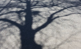Tree shadow left Stock Images