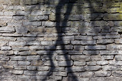 Tree shadow on old wall Stock Images