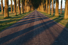 Tree shadow pattern on the road Stock Photo