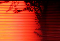 Tree shadow on red door. Royalty Free Stock Images