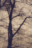 Tree shadow on roof top Royalty Free Stock Photography
