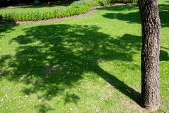 Tree shadow on short green grass in garden Stock Images