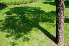 Tree shadow on short green grass in garden Stock Photo