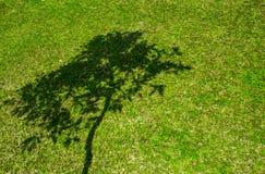 Tree shadow on short green grass Stock Photo