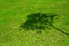 Tree shadow on short green grass Royalty Free Stock Photos