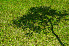 Tree shadow on short green grass Stock Images