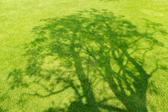 Tree shadow on short green grass Royalty Free Stock Photography