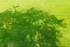 Tree shadow on short green grass Stock Image