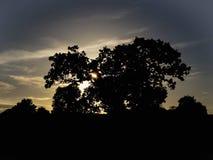Tree shadow stock photo