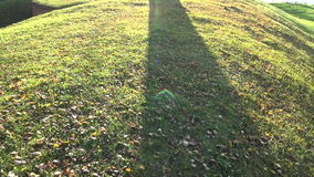 Tree shadow and sunlight. Autumn evening tree shadow and sunlight stock video footage