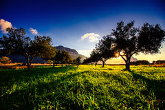 Tree shadow with sunset. Royalty Free Stock Photos