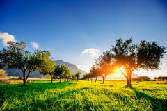 Tree shadow with sunset Royalty Free Stock Image