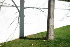 Tree and Shadow Stock Image