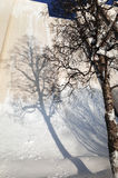 Tree Shadow on Wall Stock Photo
