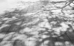 Tree shadow on the white concrete  blackground Stock Images