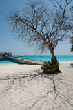 Tree and shadow on the white sand Royalty Free Stock Image