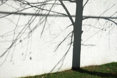 Tree and Shadow Stock Photography