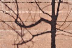 Tree shadow. On wood wall texture Stock Photos