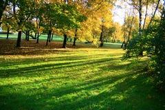 Tree shadows Royalty Free Stock Photography